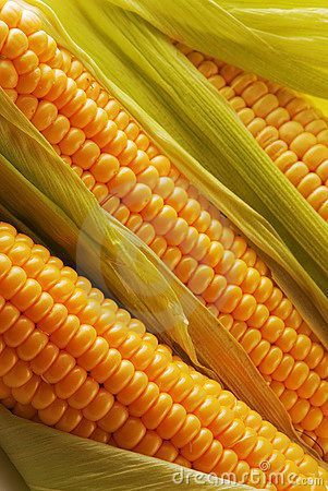 Free Corn Stock Photography - 3681952