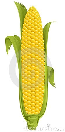 Free Corn Stock Photography - 7424302