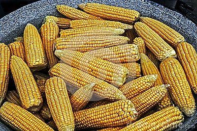 Corn boiled in a large pot