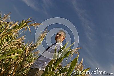 Corn business