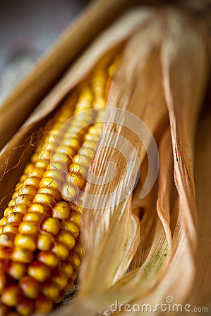 Corn close-up.