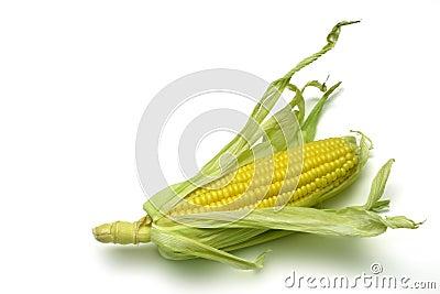 Corn Cob 1