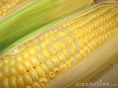 Corn in cob