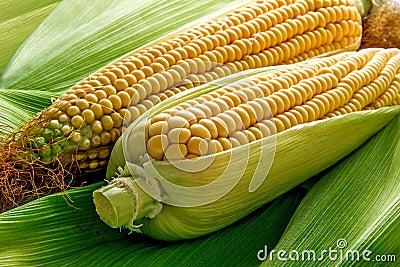 Corn and cob