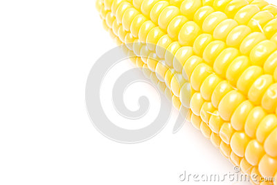 Corn cob closeup isolated, selective focus