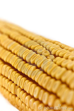 Corn Cob Detail Stock Photo - Image: 13199750