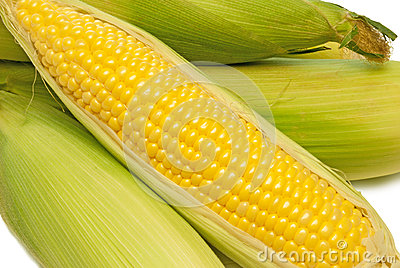 Corn On The Cob Fresh Picked