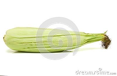 Corn Cob husk