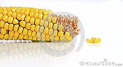Corn Cob And Kernels On White