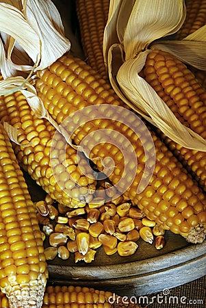 Free Corn Cobs - Grain Maize Stock Image - 12877731