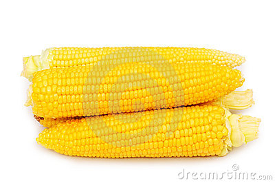 Corn cobs isolated