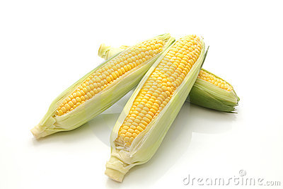 Corn in the ear