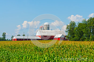 Corn Field with Colourful Barn