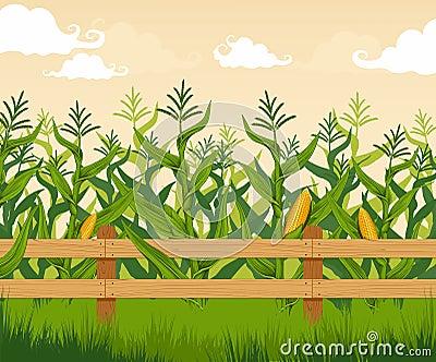 Corn field Vector Illustration
