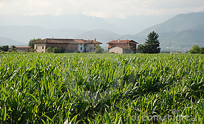 Corn Field and Farm 1