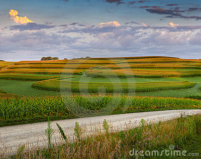 Corn Field Patterns and Gravel Road
