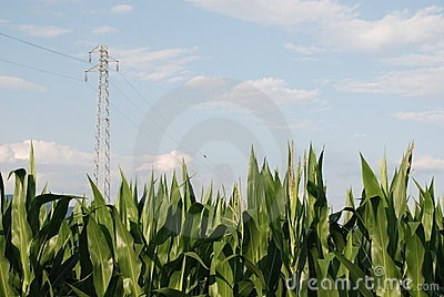 Corn Field and Pylon 1