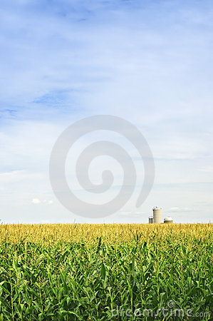 Free Corn Field With Silos Royalty Free Stock Images - 12612769