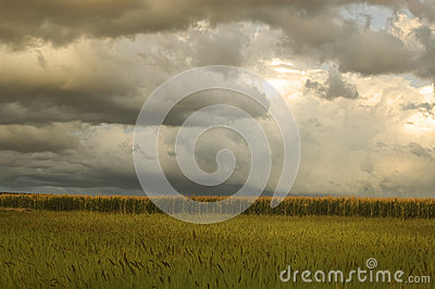 Corn fields before thunderstorm
