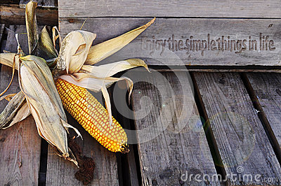 Corn husks, with enjoy life quote