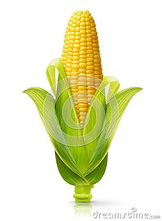Free Corn Isolated Royalty Free Stock Image - 60416846