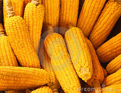 Corn - one fresh cob
