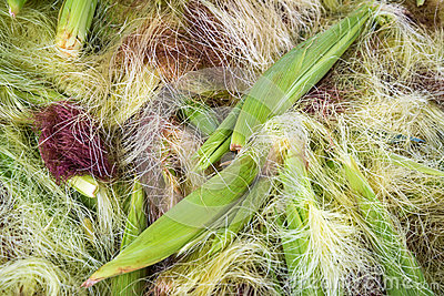 Corn peel silk background