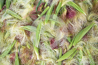 Corn peel silk background