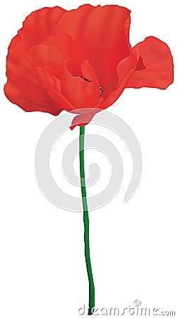 Free Corn Poppy Royalty Free Stock Photography - 4976687