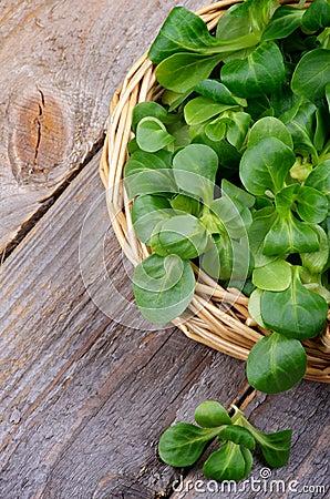 Free Corn Salad Stock Photo - 38049800