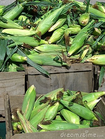 Corn for Sale