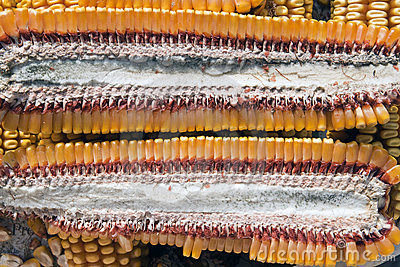Corn section