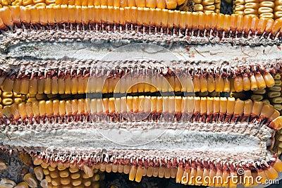 Corn section