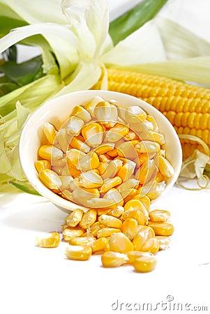 Free Corn Series 03 Stock Photo - 10514190