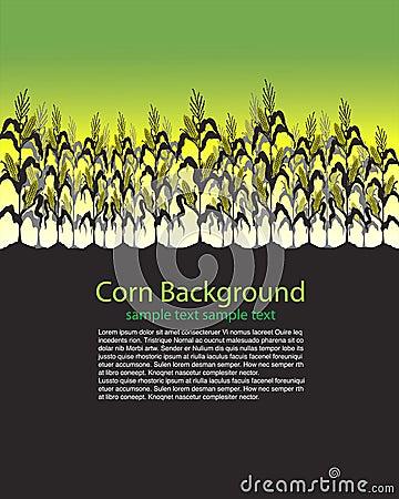 Corn Stalks Field