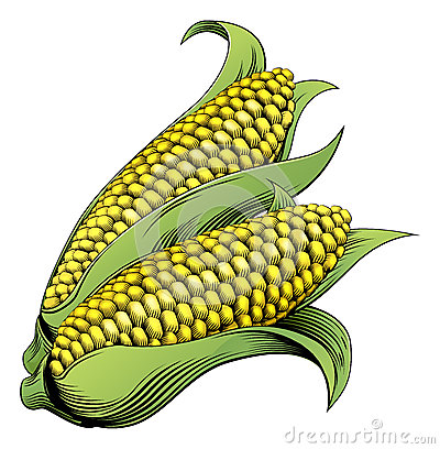 Free Corn Vintage Woodcut Illustration Royalty Free Stock Photo - 39326015