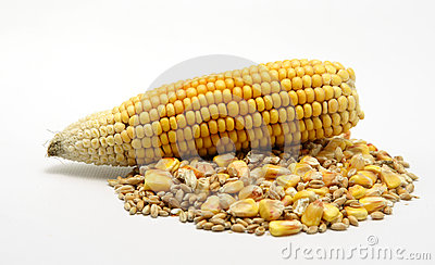 Corn and wheat