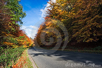 Corner on a road through autumn trees