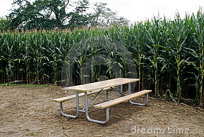 Cornfield with Picnic Table