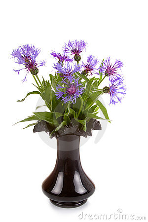 Free Cornflowers In A Black Vase Royalty Free Stock Image - 22635736