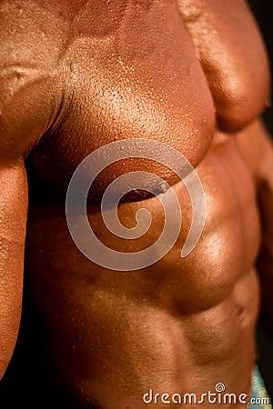 Corpo do Body-builder