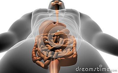 Corpo humano com sistema digestivo