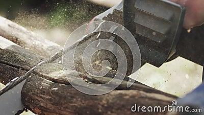 Corrente elétrica cortando uma árvore Fechamento Devagar o 4K vídeos de arquivo