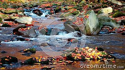 Corriente en el bosque de otoño almacen de metraje de vídeo