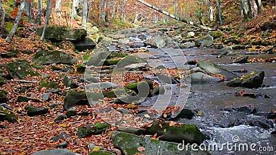 Corriente en el bosque de otoño almacen de video