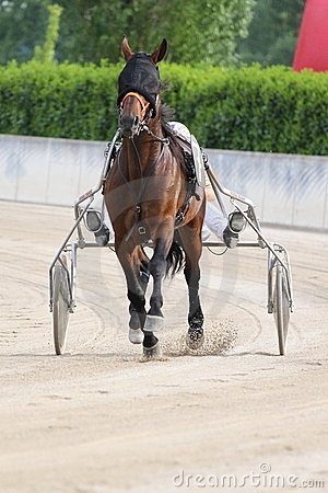 Corsa dell italiano del cavallo Fotografia Editoriale