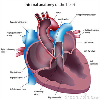 Corte do coração