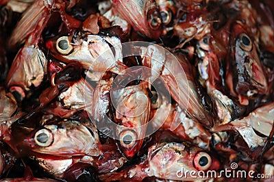 Corte las pistas de los pescados