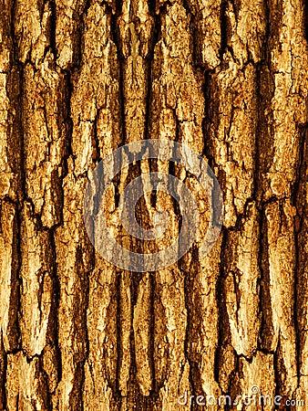 Corteccia di un albero una quercia