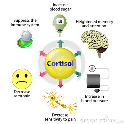 Free Cortisol Functions Stock Images - 66091054